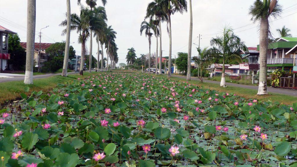 Nieuw-Nickerie Suriname